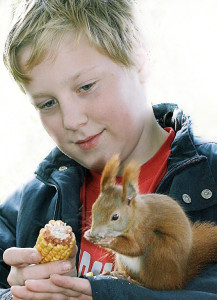 EichhörnchenEckernförde (1)