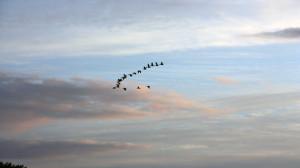 Vögel fliegen am Himmel in einer Reihe.