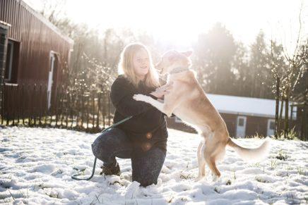 Herzblut für Schutzbedürftige im Tierheim Schleswig