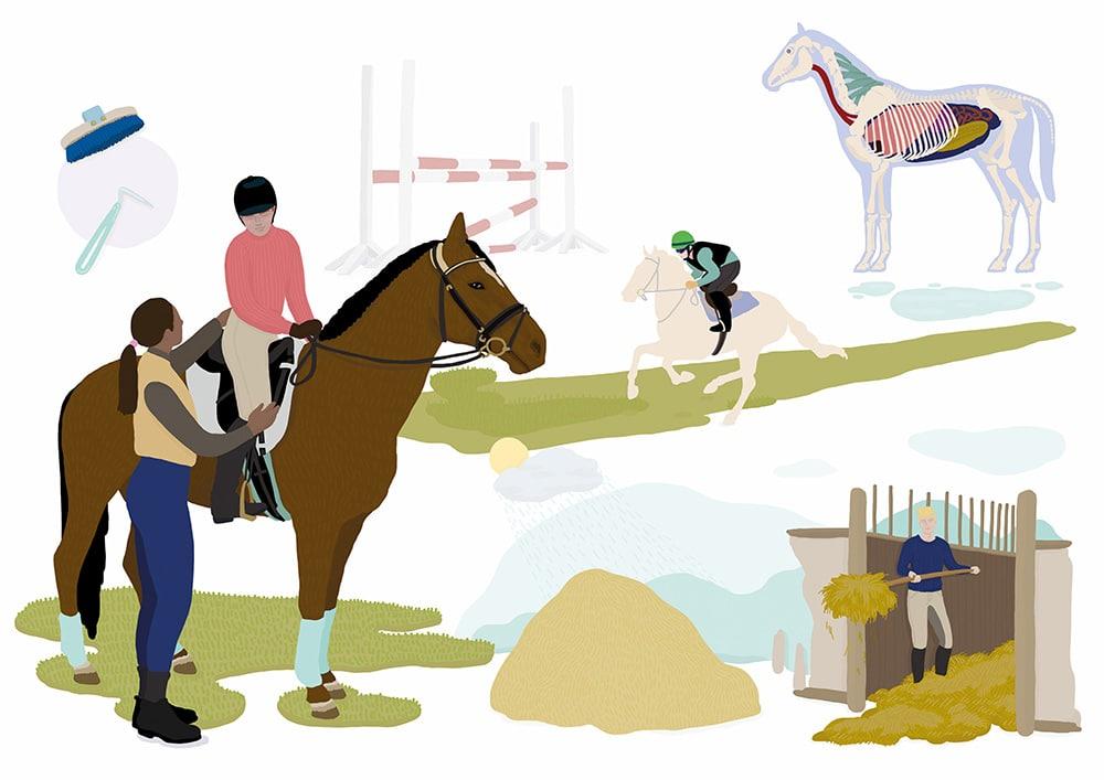 Berufsbild Pferdewirt