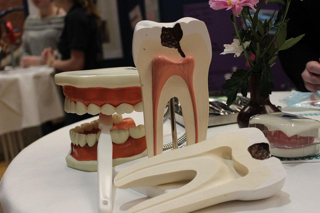 Zahnmedizin auf dem Berufsinformationstag in der beruflichen Schule in Niebüll