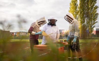 Bienen für die Zukunft – Nachhaltigkeit ist ein Thema an TH Lübeck