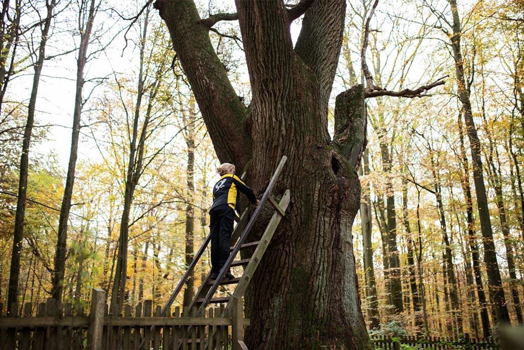 Natürlich! Ein Baum ist das älteste Dating-Portal Deutschlands